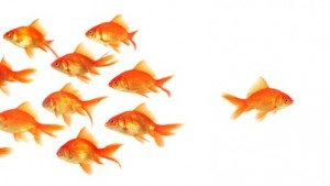 The Oxymoron Of Small Business Social Media Marketing image Small Business Social Media Marketing Goldfish Swim Against Stream 300x169