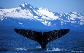 Are You the Sardine in the Sea? image whale