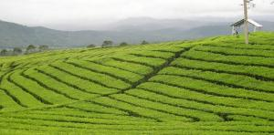 The Top 10 Eco Tours in India image Munnar Kerala India1