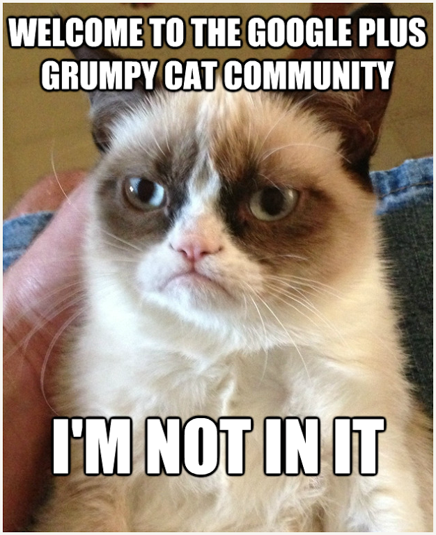 Google Communities to Grumpy Cat