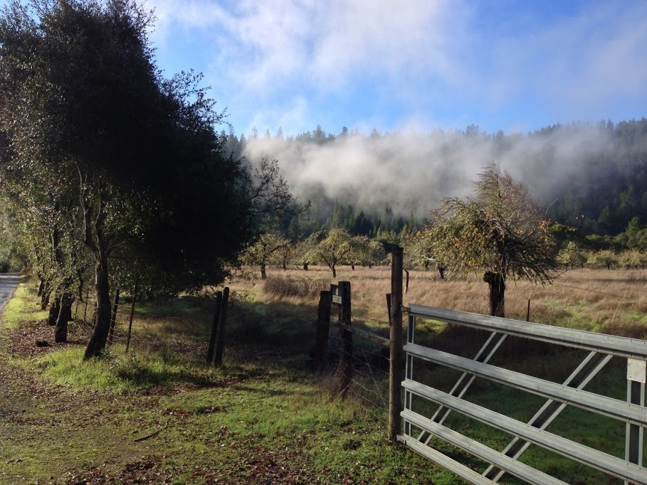 Wine Tasting Along the Anderson Valley Wine Trail   Part 2 image Side road fog1
