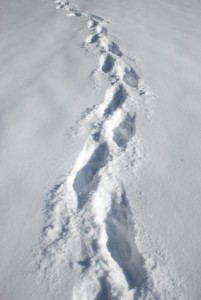 Vowing to Blog More? 7 Shortcuts for Fast Blog Posts image snow footprints istocki 201x300