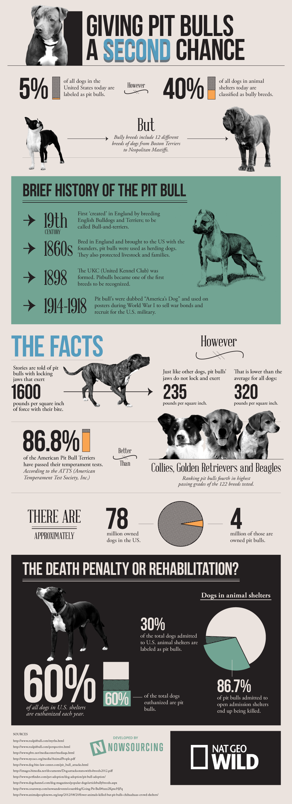 Giving Pit Bulls a Second Chance [Infographic] | Business 2 Community