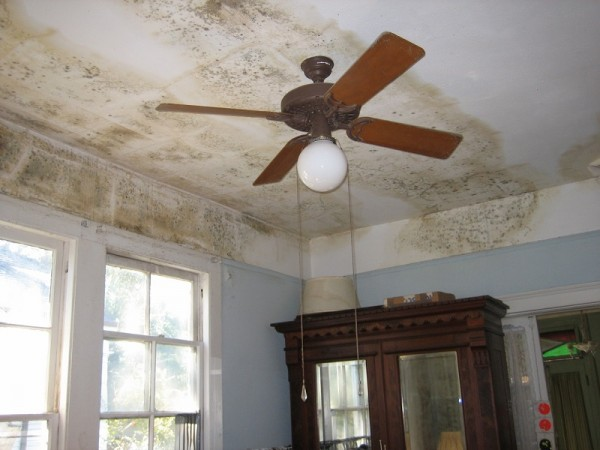 Toxic Mold Poses As Health Threat To Sandy Victims image Mold Damage Commons Wiki 2 600x450