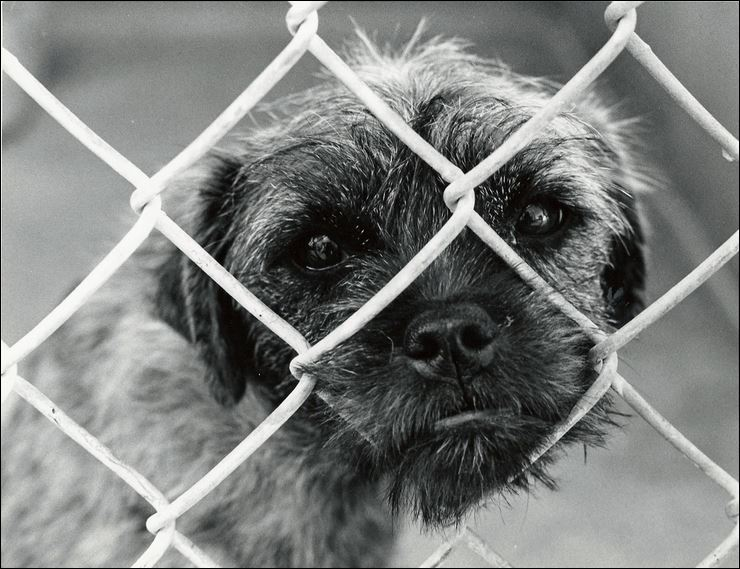 Social Strategy for the Dogs. How Social Media is Saving Animal Lives. image shelter dog1