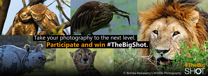 Microsoft's Bing Lets Amateur Photographers Take #TheBigShot, Winning Photos To Feature On Home Page image bing thebigshot