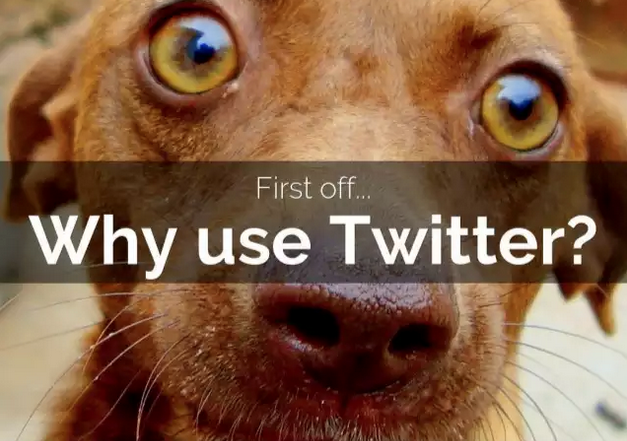The Beginner's Guide to Twitter Advertising