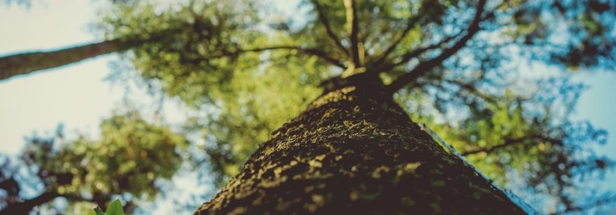 Tall tree that has outgrown others. Growth hacks for lead generation.